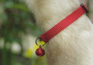 Nylon fretten halsband met bel