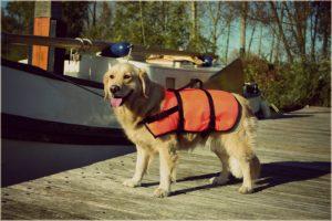 zwemvest hond