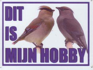 Dit is mijn hobby bord met Pestvogels-0