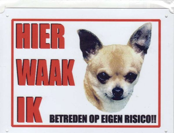 Waakbord Chihuahua 1 blond korthaar-0