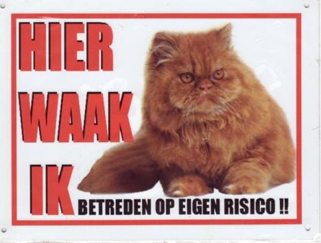 Waakbord Kat rode Pers-0