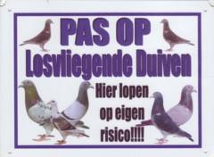 Pas op losvliegende duiven-0