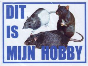 Dit is mijn hobby bord met Ratten-0