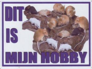 Dit is mijn hobby bord met Muizen-0