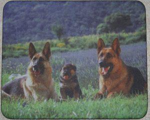 Muismatten hond