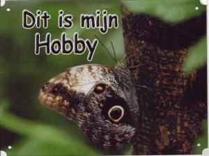 hobby vlinder