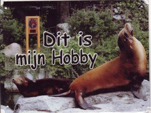 zeeleeuwen hobby