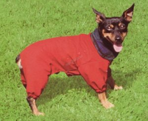 Hondenjas Paris 45 cm Rood