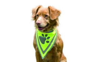 veiligheids hals doekje hond