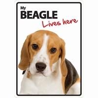 OD Waakbord Beagle lives here-0