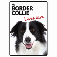 OD Waakbord Border Collie lives here-0